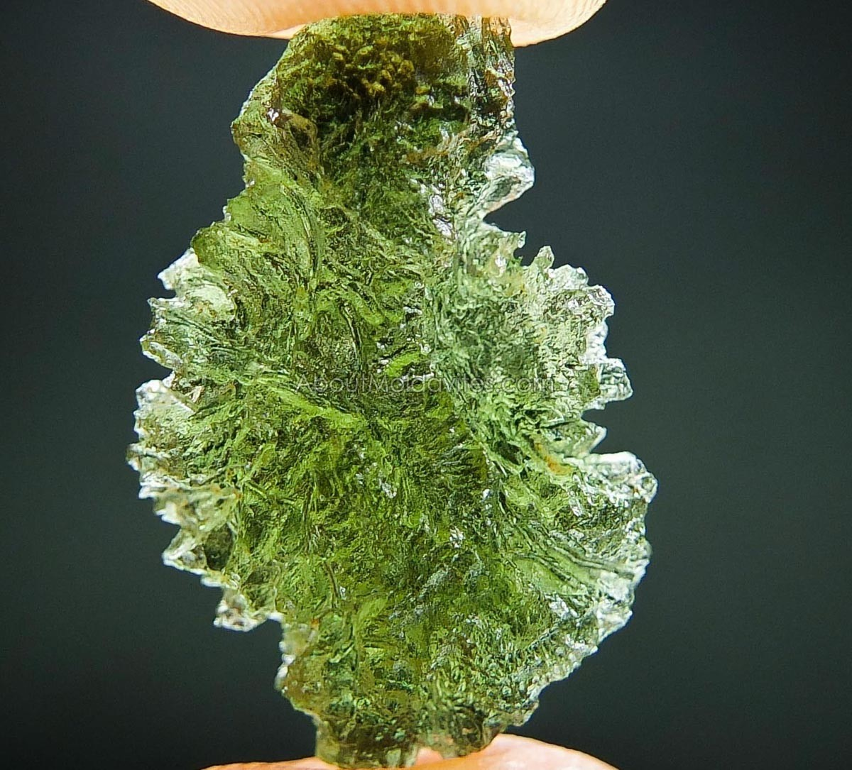 Moldavite - like hedgehog - from Nesmen