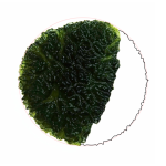 Moldavite shape - Disk-fragment (partial primary shape)