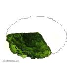 Moldavite shape: Elipsiod - fragment